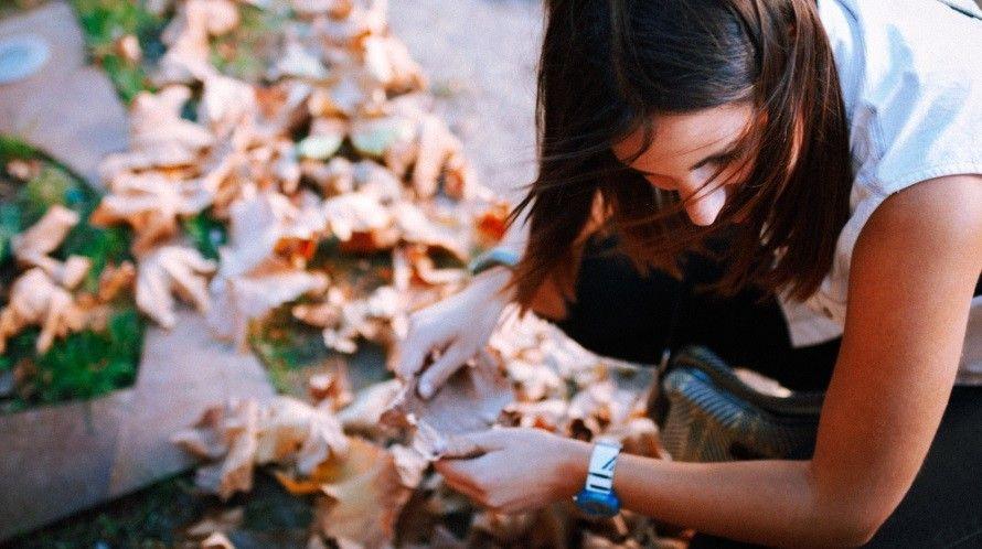 Lees hier wat je allemaal met afgevallen bladeren kunt doen