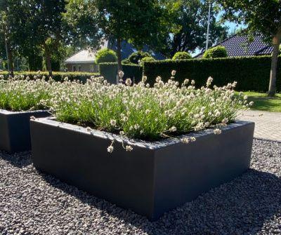 Bekijk onze grote vierkante plantenbakken