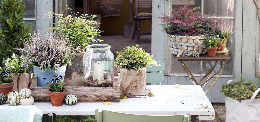 Je tuin klaar maken voor de herfst